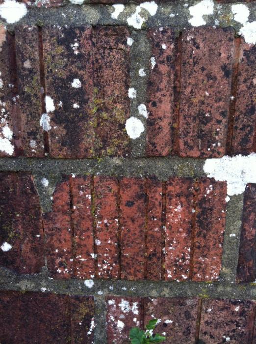 23.10.2013, wall segment outside the pillbox, Stanton Saint Bernard